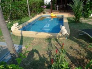 plung-pool-mae-phim-3
